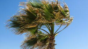 palm-tree-1374868_640