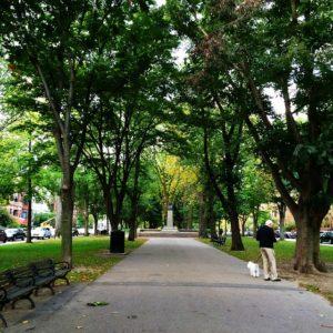 trees-599748_640