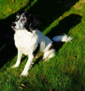 dog-1680874_640