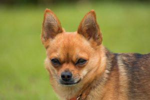 dog-2511211_640