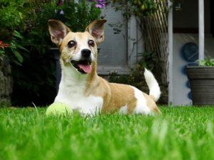 doggy-2648200_640