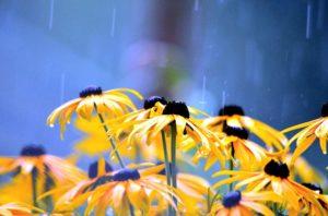 flowers-2611590_640