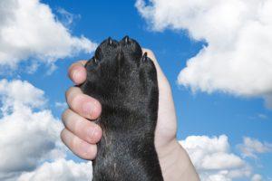 dog-2383071_640