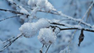 winter-1224075_640