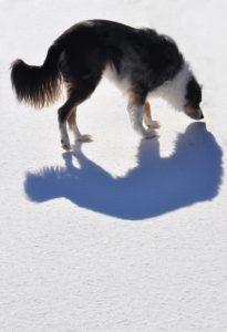 dog-101115_640