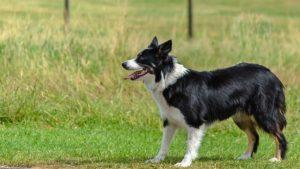 dog-1548176_640