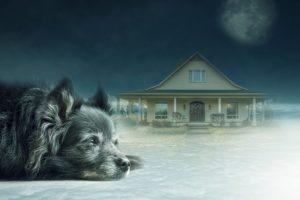 dog-3168564_640