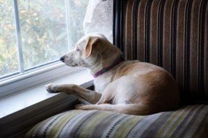puppy-dog-2862419_640