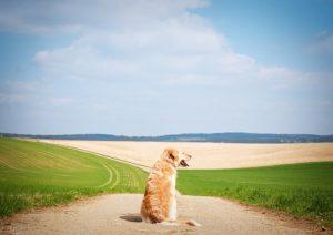 dog-1196414_640