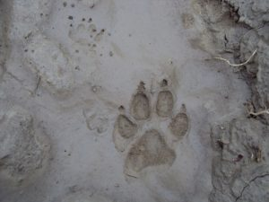 footprint-192852_640
