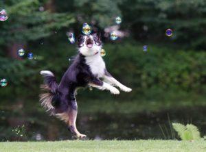 soap-bubbles-672642_640