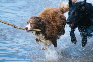 dogs-1246588_640