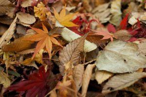 leaves-984544_640