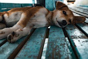 puppy-1149426_640