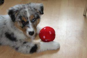 puppy-427137_640
