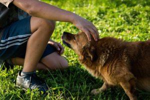 dog-454145_640