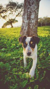 dog-1082096_640
