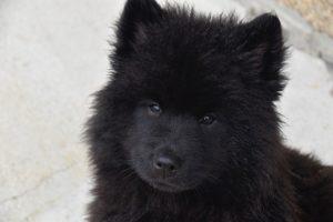 dog-4335948_640