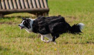 running-dog-4413620_640