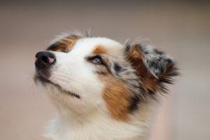 dog-4534463_640
