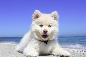 beach-1790049_640