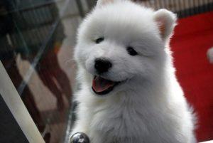 puppy-17473_640